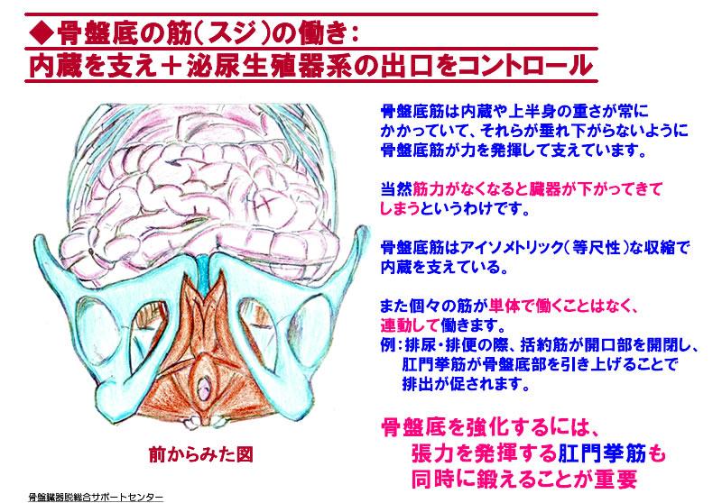 骨盤底筋の膜04